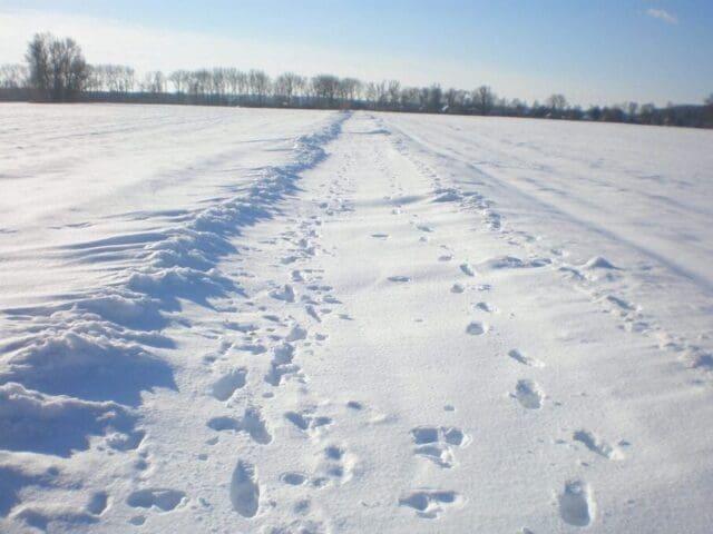Deset let od vydatného sněžení vlivem níže Daisy. Vysoký sníh v Polabí.