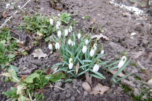 Silný vítr každý den, o víkendu krátce jaro. První jarní květiny.