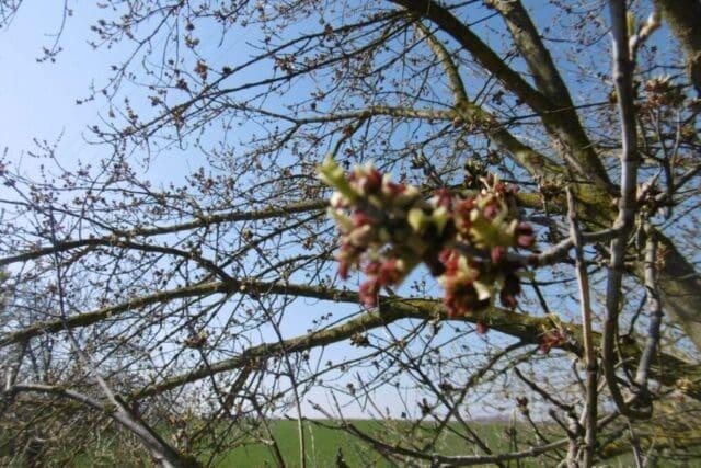 Prvního únor bylo 17°C. Začátek jara.