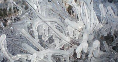 Hlavní mrazy skončily, bohužel škodily. Led po mrazu.