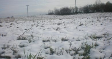 I v březnu bude ležet v nížinách sníh, jako před 14 lety. Sníh na trávě.