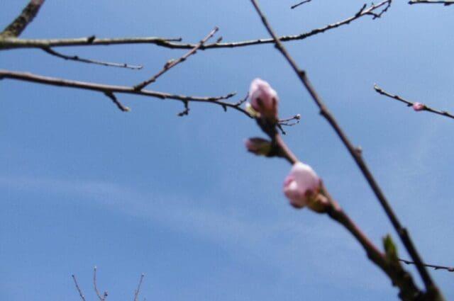 Do pátku jaro, poté až zima