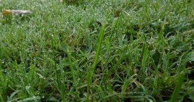 Tepelná bilance a radiační ochlazování. Rosa na trávě.