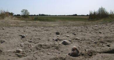 K čemu je dobré horké počasí? Velké výkyvy teplot. Bude sucho problémem naší země? Horko a sucho.