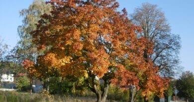Podzimní krajina, slunné počasí. Po polovině týdne bude i přes 20°C