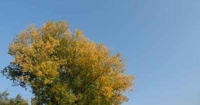 Krátké babí léto. Slunečné počasí a podzim, bude příští týden teplo?