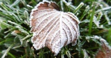 Jíní na trávníku, ke konci týdne zimní počasí