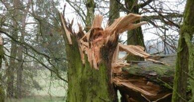 Silný vítr po celý víkend. Zlomený strom.