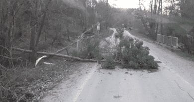 Na západě Evropy foukalo rychlostí 170km/h. Popadané stromy po větru.