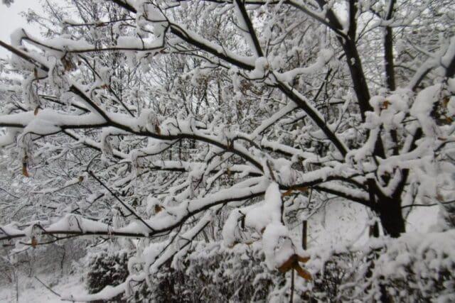 Kde napadne sníh?