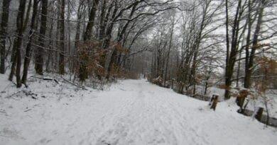 Postupně zimní ráz počasí. Zasněžená lesní cesta.