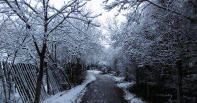 Během víkendu se vrátí zima. Zasněžený les.