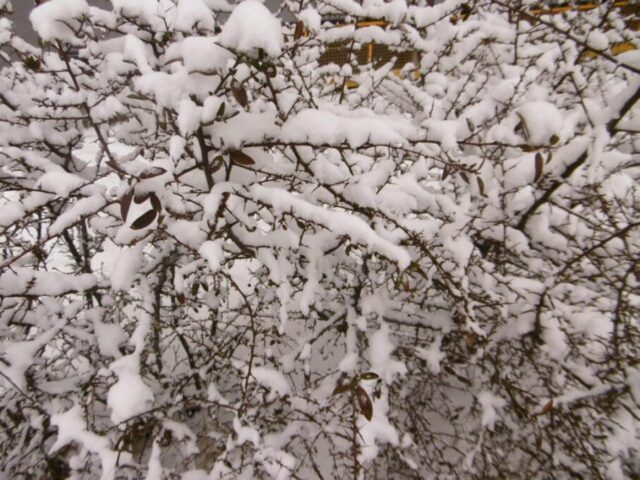 Ke konci týdne sněžení i v nížinách