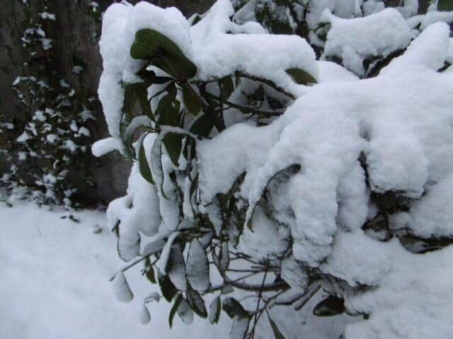 Příděl sněhu v Beskydech