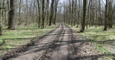 Sušší a postupně teplejší počasí. Lužní les na počátku jara.