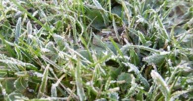 Teplota klesne ráno k 5°C. Zahrozí ještě přízemní mráz? Sníh i v nížinách. Jíní po ranním mrazu.